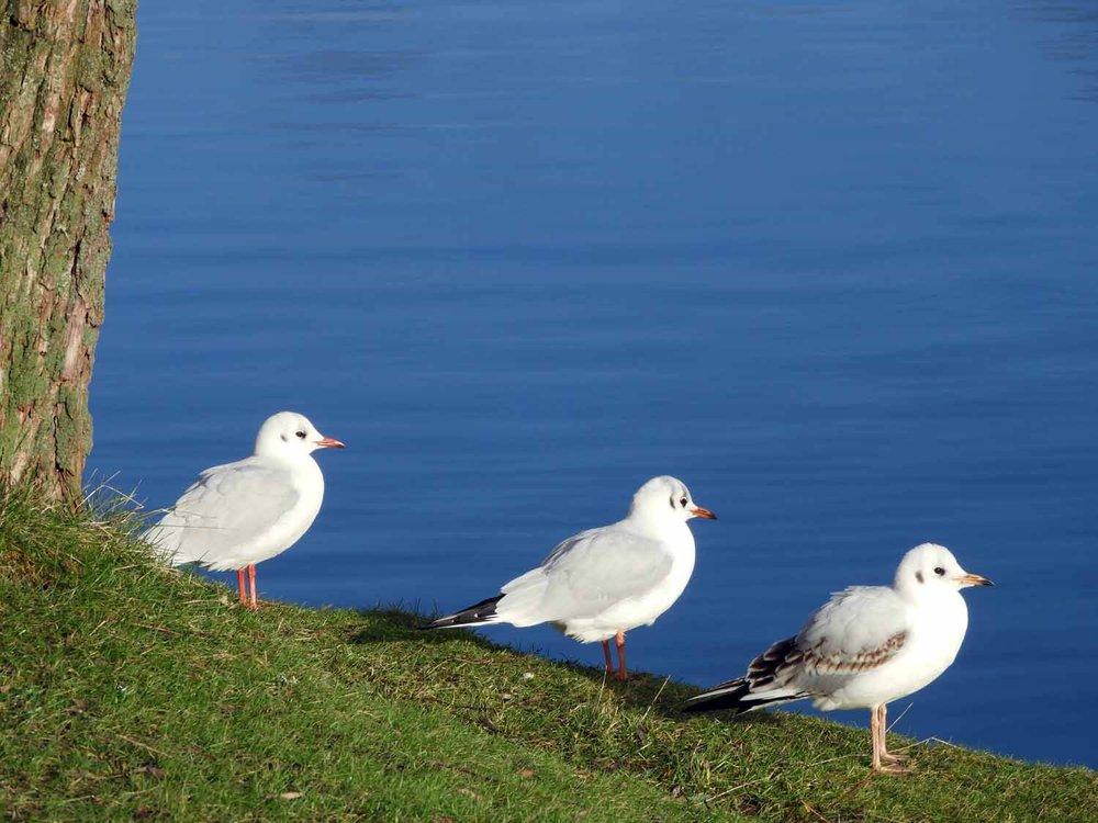 denmark-frederiksborg-slot-castle-birds-lake-slotssoen-hillerod.JPG