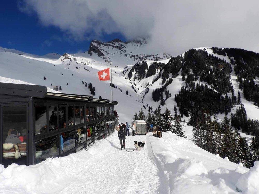 switzerland_grindelwald_worlds_longest_sled_run_sledding_winter_sports_bussalp (1).JPG