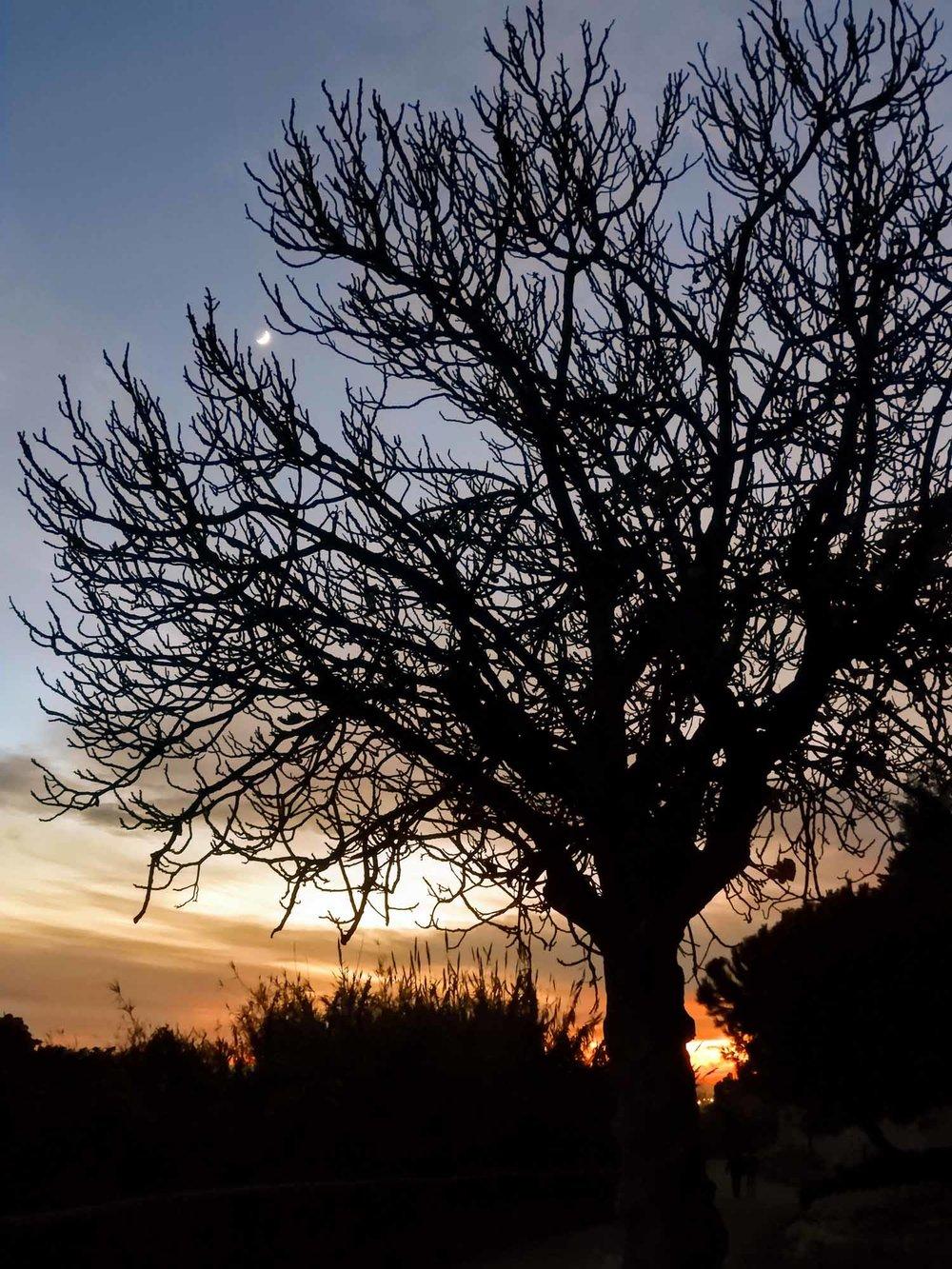 spain-barcelona-montjuic-tree-sunset.jpg