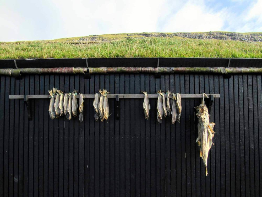 Local Cusine - Dried and fresh first are an important part of the cusine in the Faroe Islands. Other historical and culturally important foods are fresh and dried mutton, seabirds -especially puffins and whale meat.