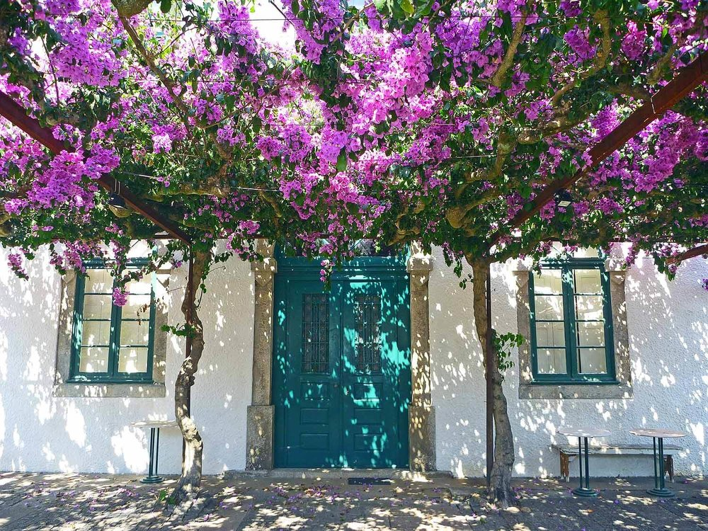 portugal-porto-oporto-museum-fundacao-foundation-serralves-blue-door-flowers.JPG