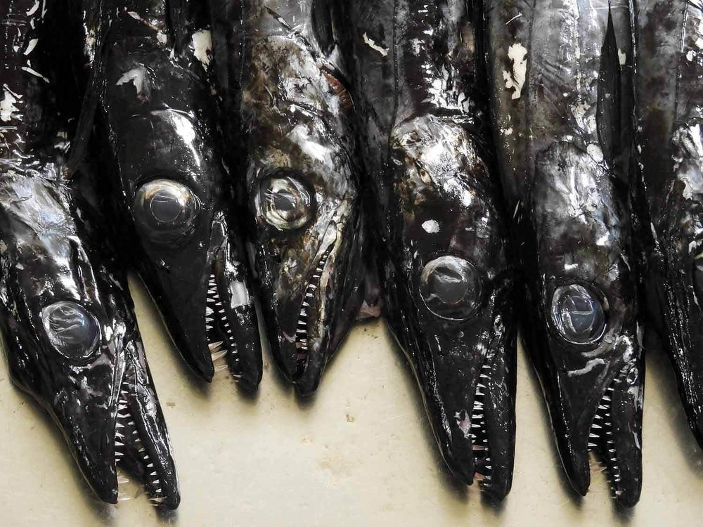 portugal-madeira-island-funchal-mercado-lavradores-fruit-market-ugly-fish.jpg