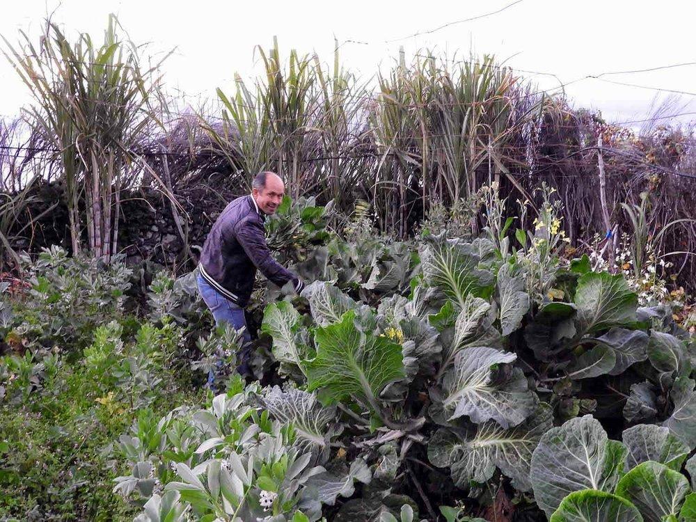 portugal-madeira-island-arco-de-sao-jorge-giant-cabbage.jpg