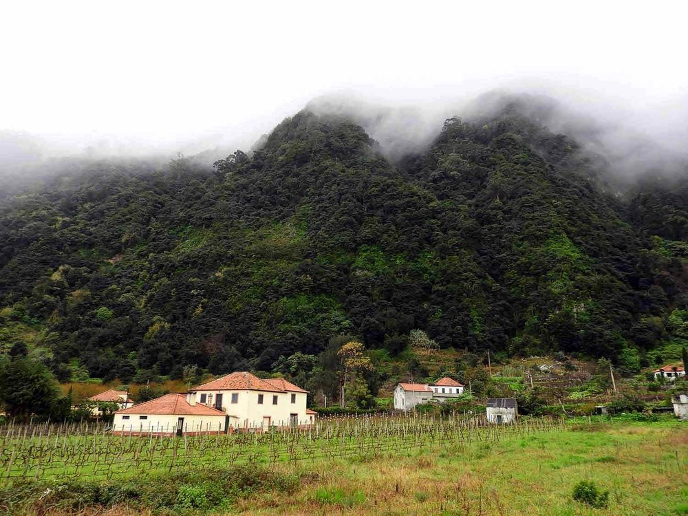 portugal-madeira-island-arco-sao-jorge-village-lush-forest-rainy-side.jpg