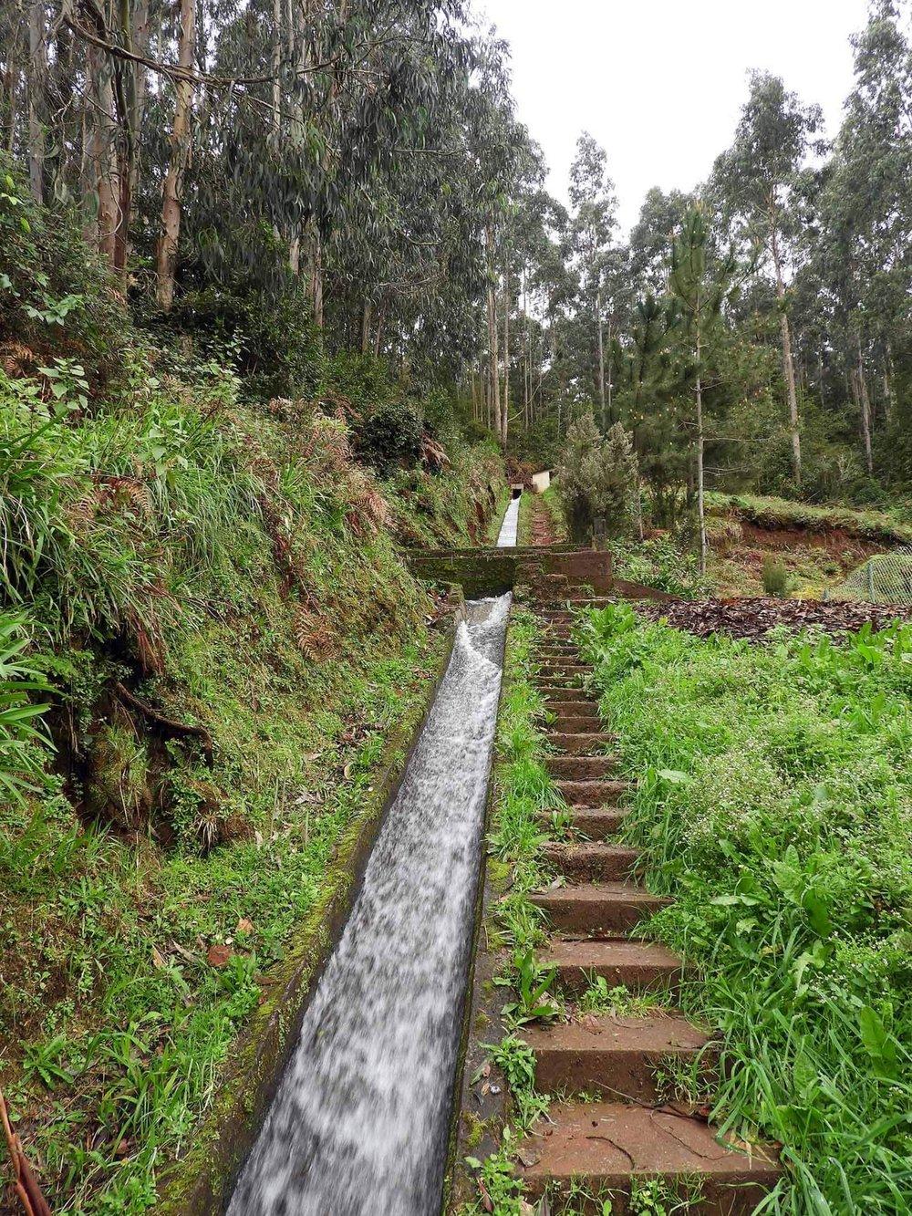 portugal-madeira-levada-rei-stairs.JPG