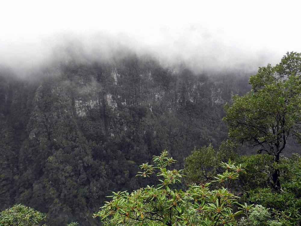 portugal-madeira-levada-calderao-verde-fog-mountains-canyon.JPG