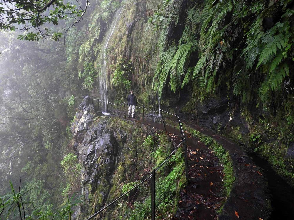 portugal-madeira-levada-calderao-verde-narrow-path-ferns.JPG