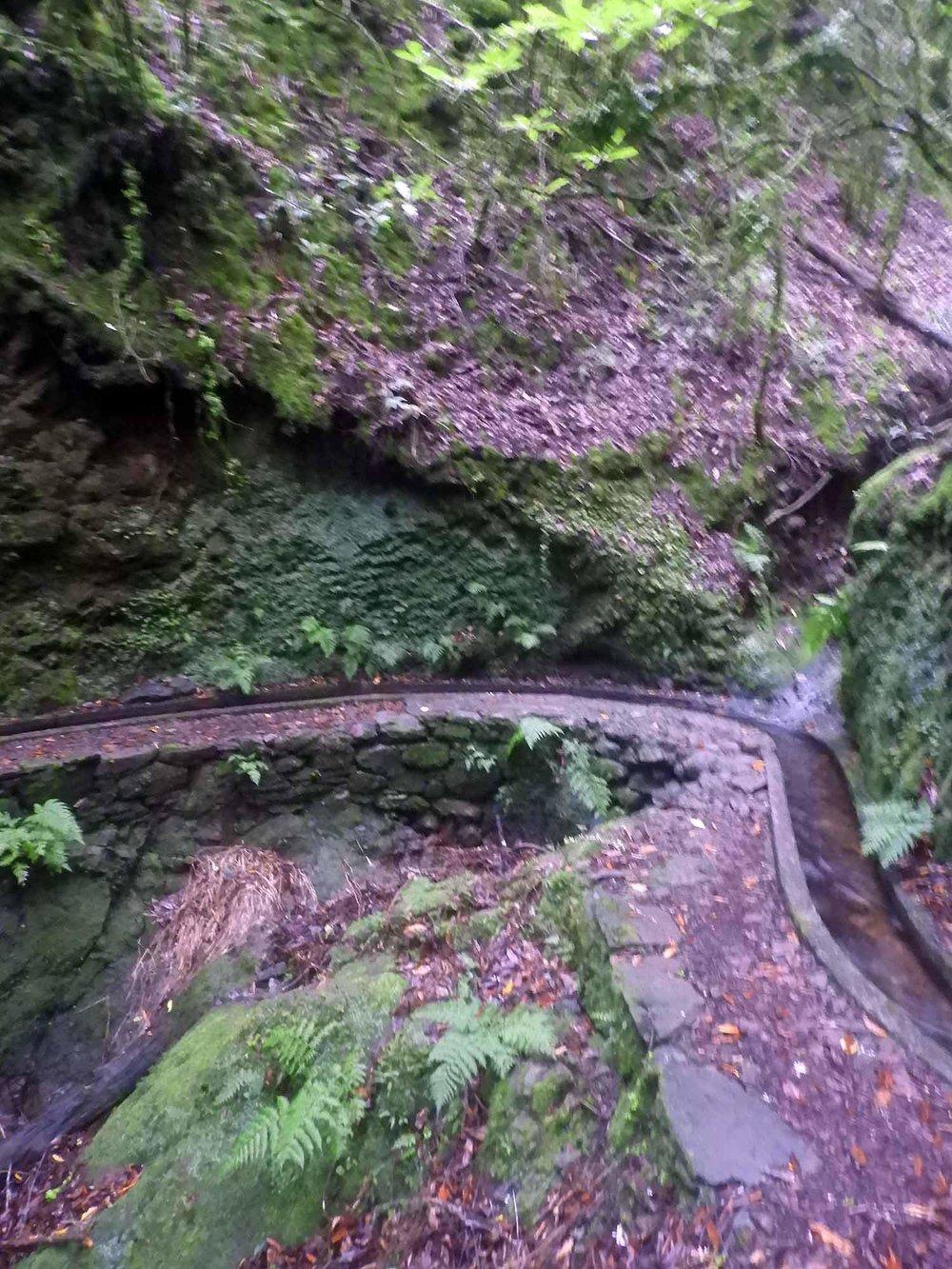 portugal-madeira-levada-cedros-trail-canal.JPG