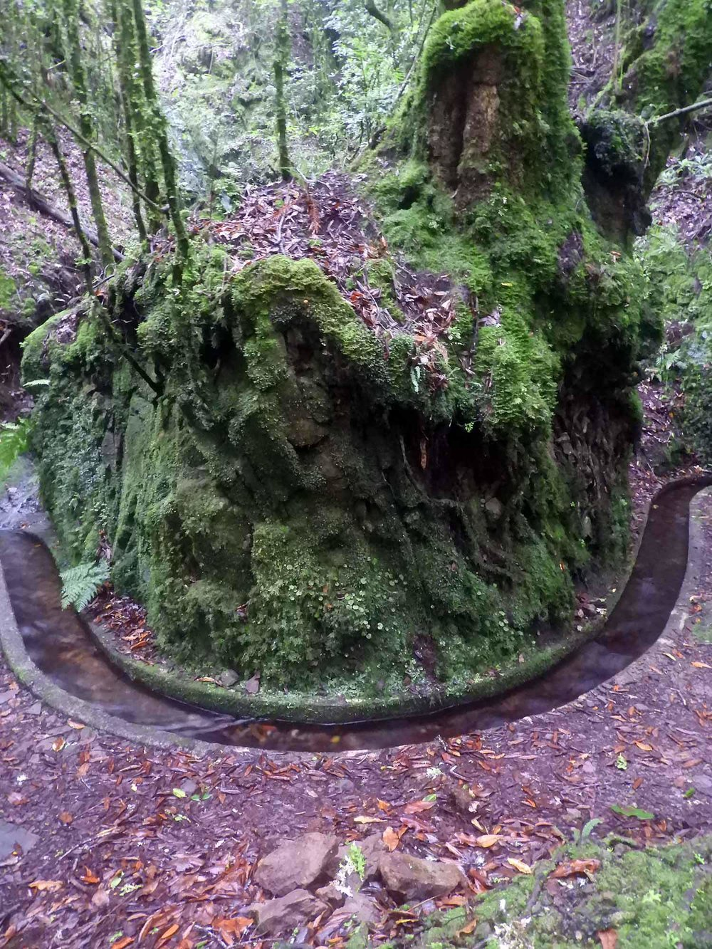 portugal-madeira-levada-cedros-u-curve.JPG