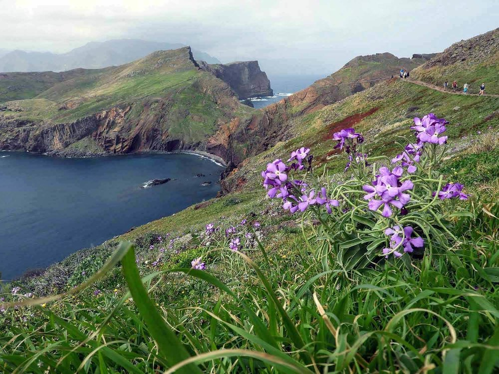 portugal-madeira-island-hike-ponta-s+úo-louren+ºo-sao-lourenco-point-wildflower-photography.jpg