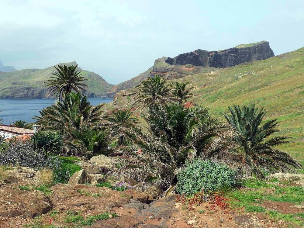 portugal-madeira-island-hike-ponta-sao-lourenco-eastern-point-palms-visitors-center-ranch.JPG
