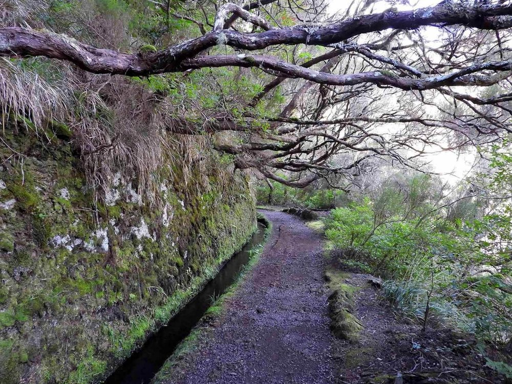 "- This walk begins just outside the small village of Ribeiro Frio (meaning cold stream) and follows the levada of Serra do Faial. Though it's only about 3 km round trip, the path lives up to its name, Vereda dos Balcões, or ""Path of Balconies, as it leads to a beautiful lookout. On a clear day, you can see Madeira's tallest mountain peaks: Pico Ruivo, Pico das Torres and Pico do Arieiro. It's a great spot to stop and eat a snack - either one you packed, or one you purchased from the snack shack along the route. But be careful - the birds will flock to you, begging for a bite.Afterwards, if you have time to spare, stop in at the souvenir shops of Ribeiro Frio to checkout the locally made goods.Check out the WalkMe Guide for trail info!"