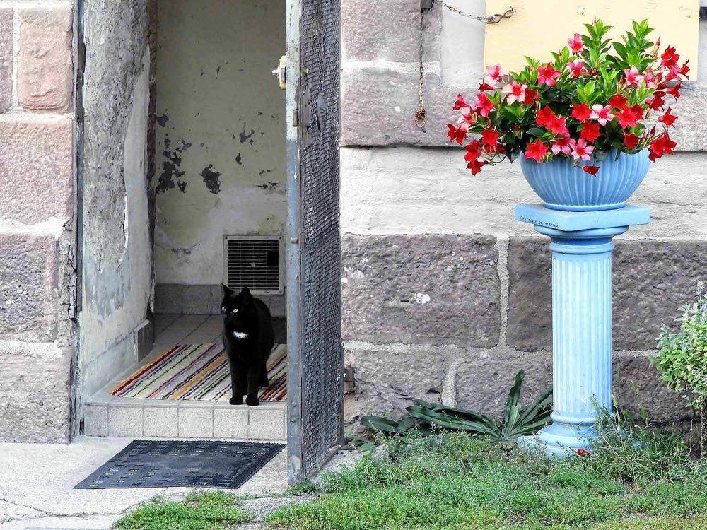 france-neuf-brisach-open-door-cat-house.jpg