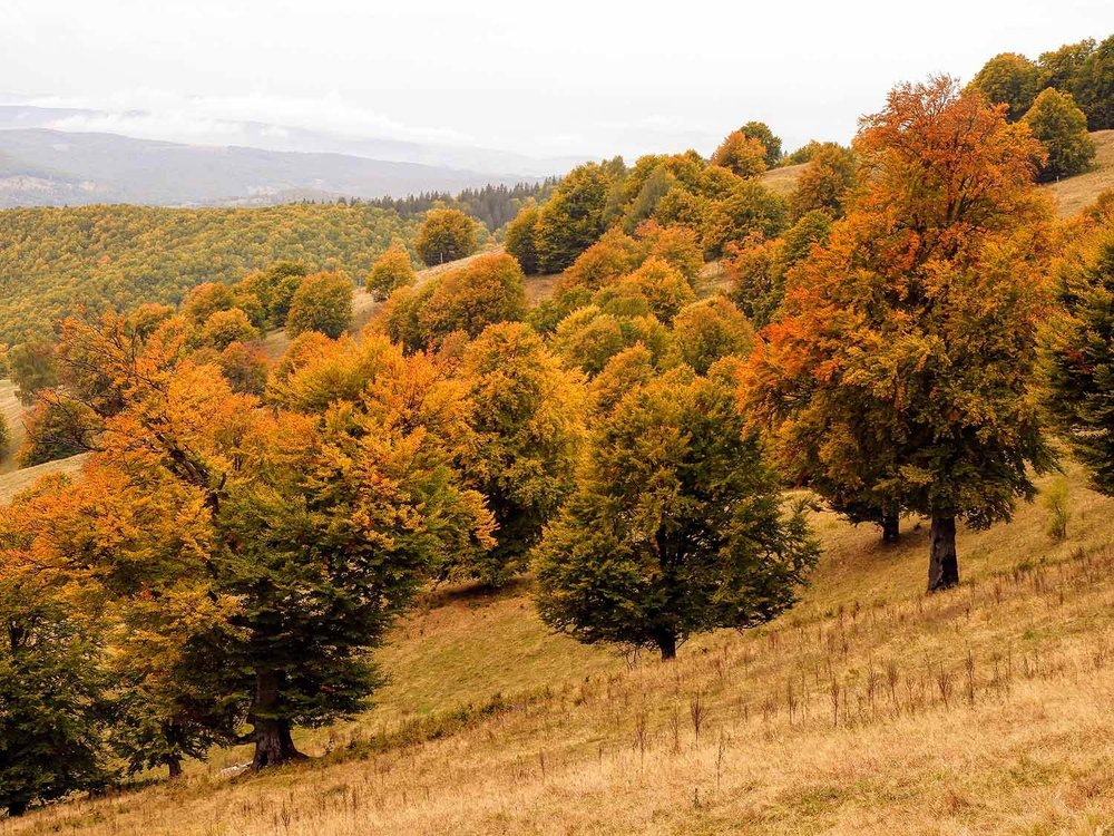 romania-saint-st-ann-crater-lake-trees-orange-yellow.jpg