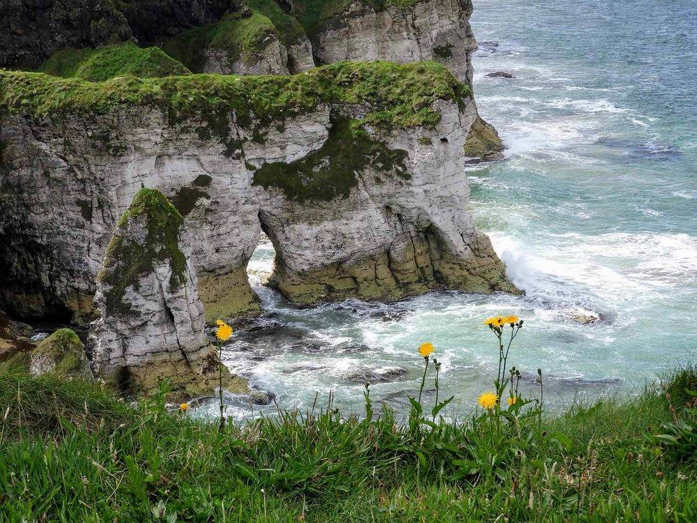 northern-ireland-coast-flowers-sea-cliffs.jpg