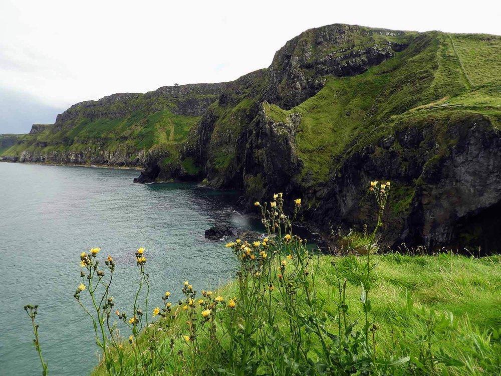 northern-ireland-coast-flowers-sea-ocean-cliffs.jpg