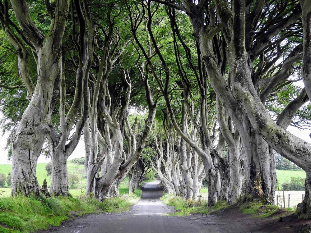 northern-ireland-coast-dark-hedges-game-thrones-bregagh-tree-tunnel.jpg