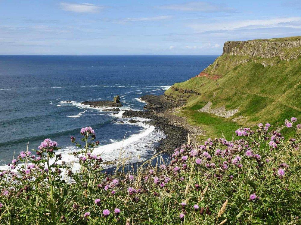 northern-ireland-giants-causeway-north-coast-bay-hike-flowers.jpg