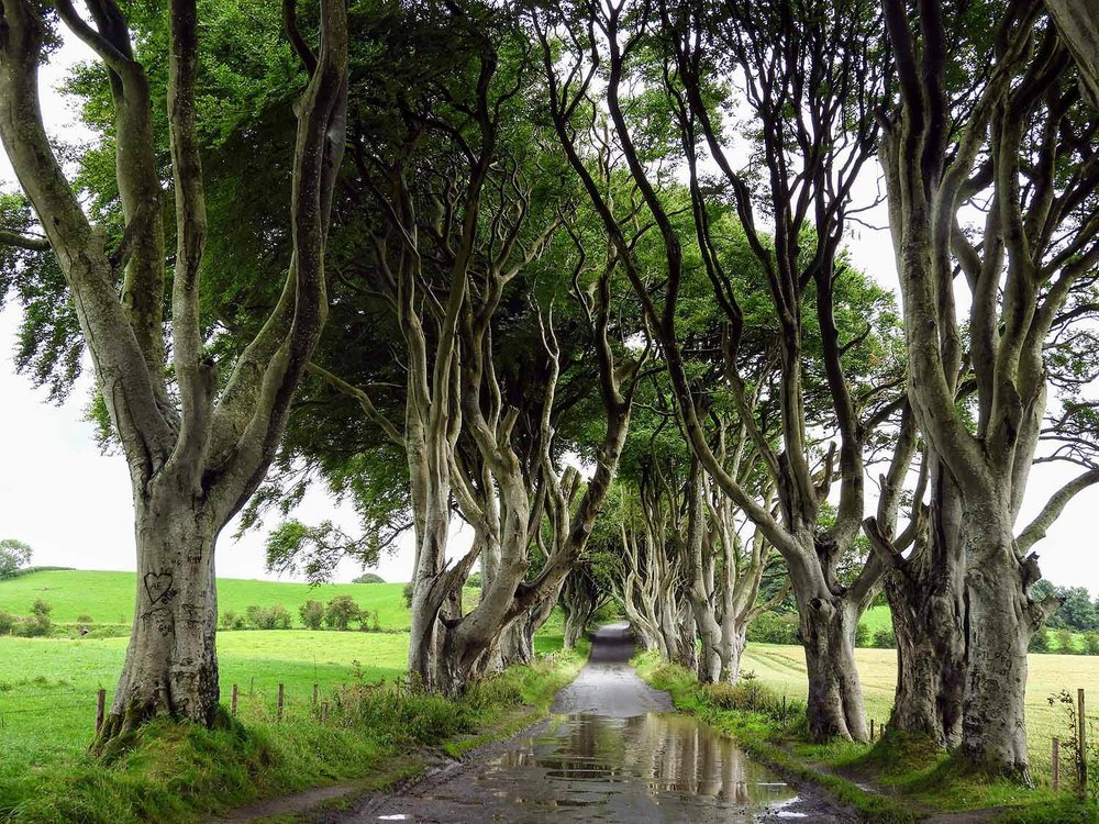 """Dark Hedges - You may recognize the beech-lined Bregagh road as """"The King's Road"""" from Game of Thrones, but when we see it, all we can think of is #estategoals.Over 150 beech trees line the path leading to this idyllic estate built in 1775! And, it's a totally free pit-stop."""