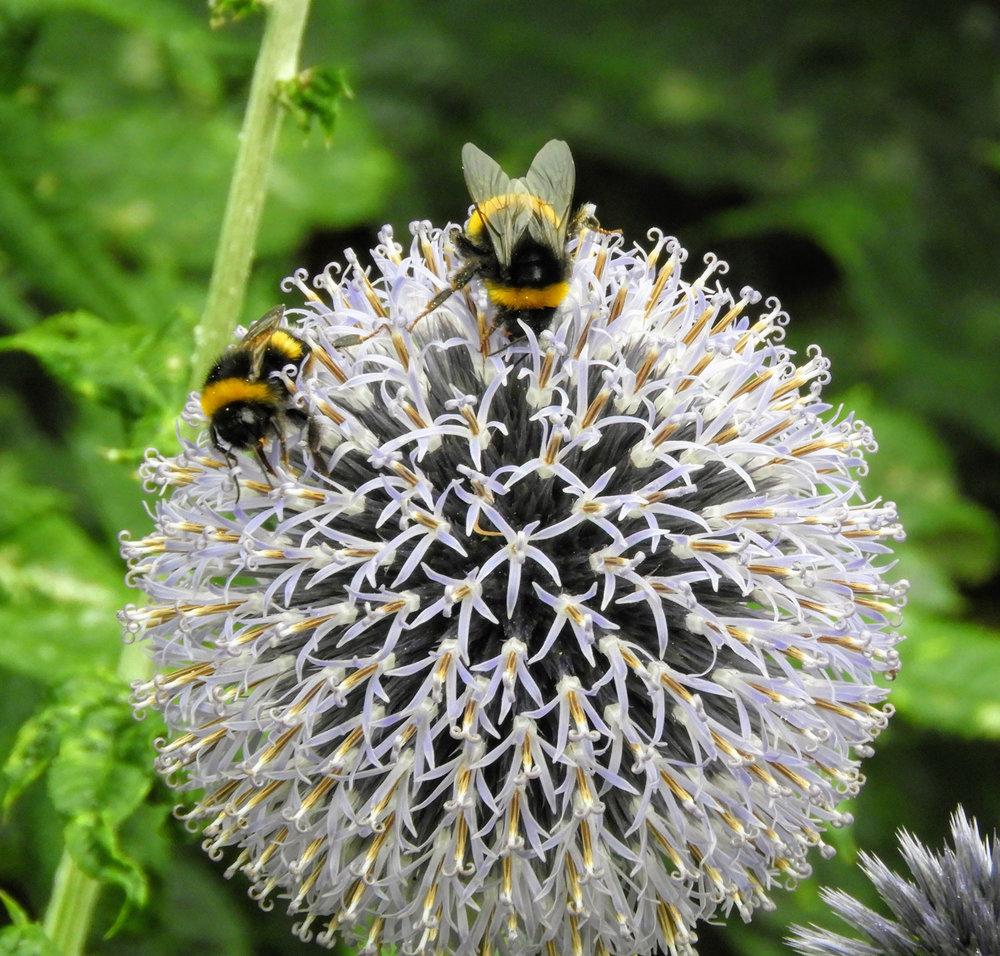 ireland-dublin-flowers-bees.jpg