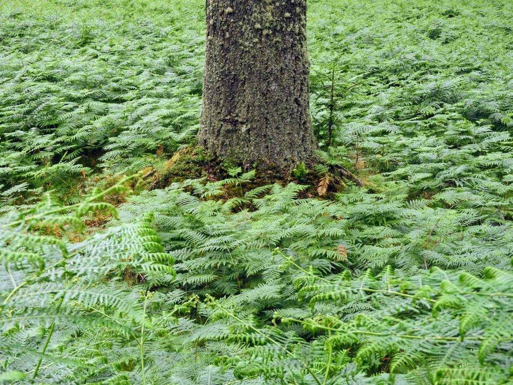 ireland-glendalough-monastic-ferns-tree-trunk.jpg