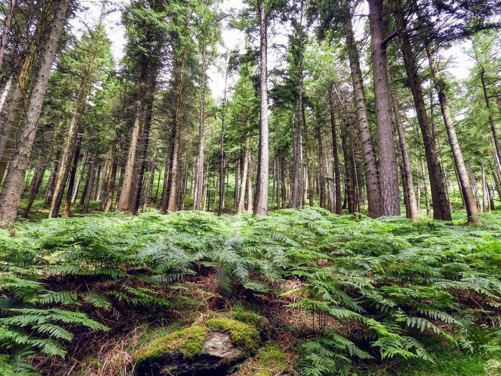 ireland-glendalough-monastic-ferns-trees.jpg