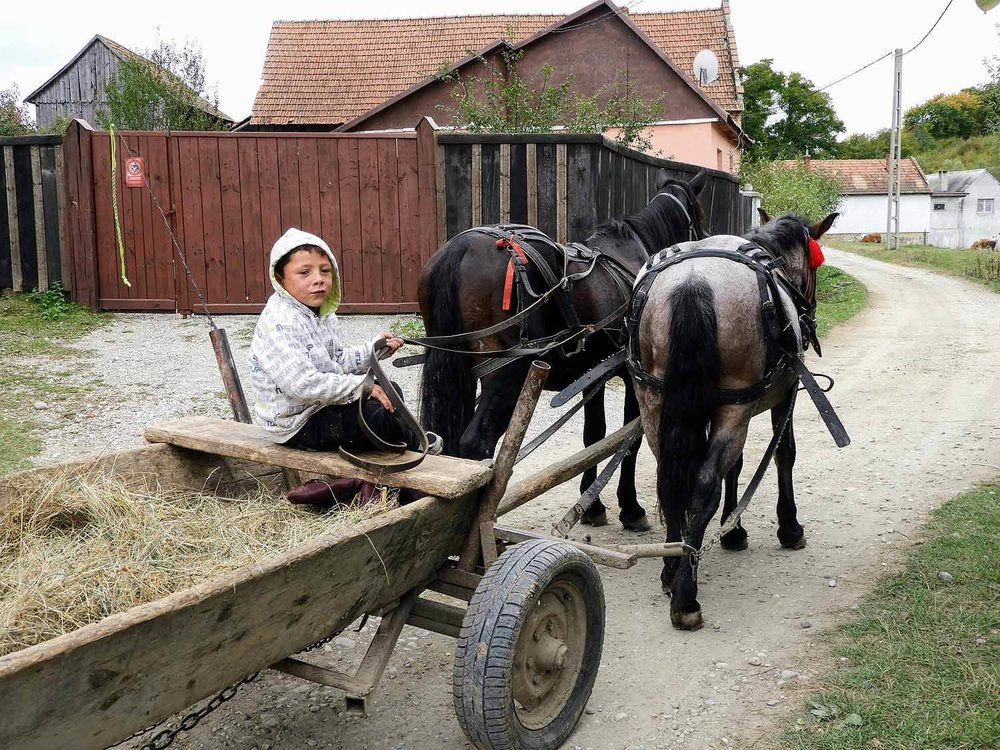 romania-hetea-kastalo-forest-gypsies-horse-wagon.jpg