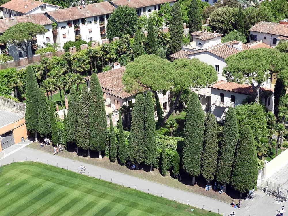 italy-italia-pisa-gardens-cypress.JPG