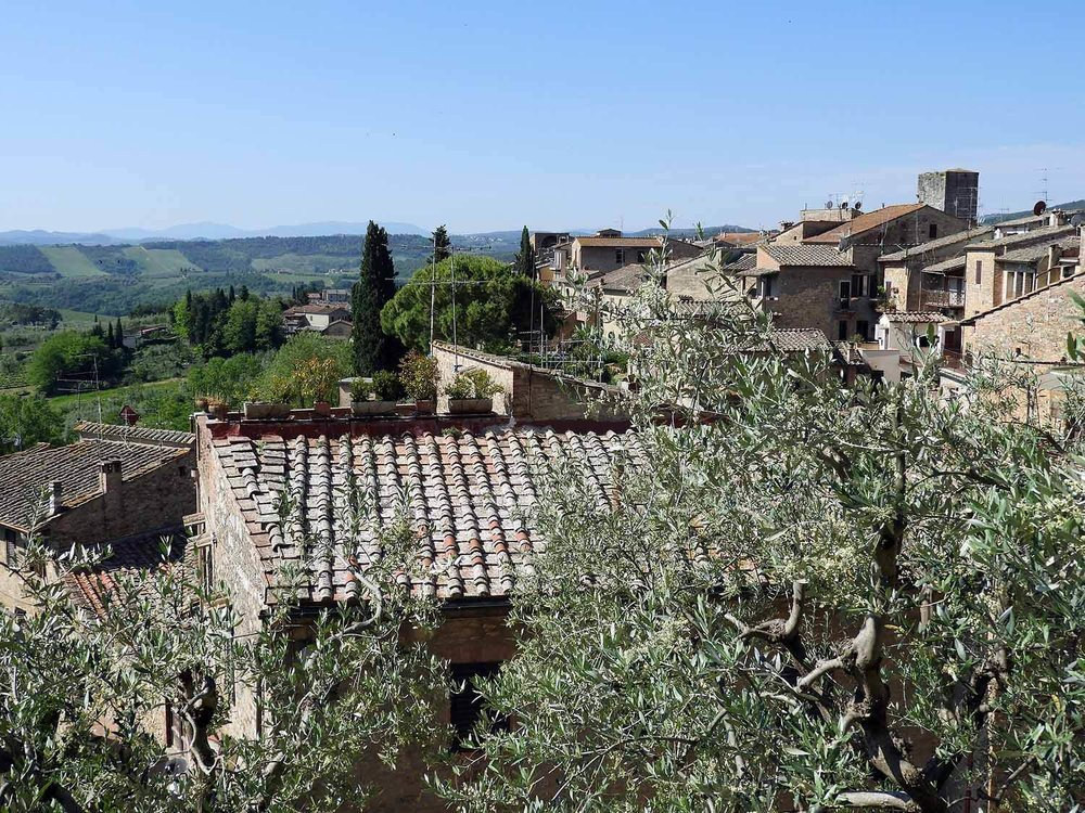 italy-italia-san-gimignano-tuscany-olive-trees.JPG