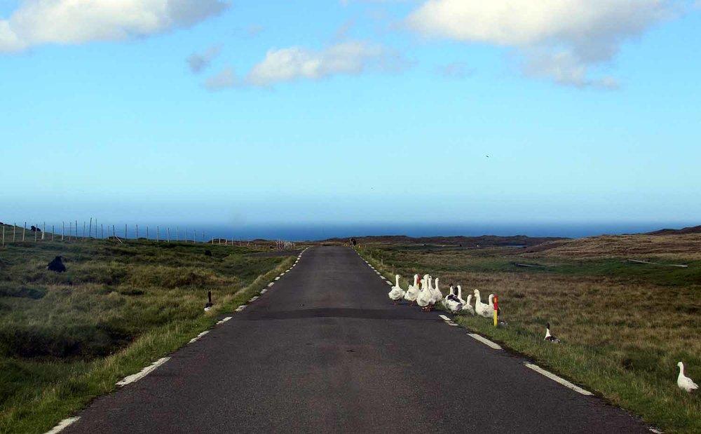 denmark-faroe-islands-ducks-road.JPG