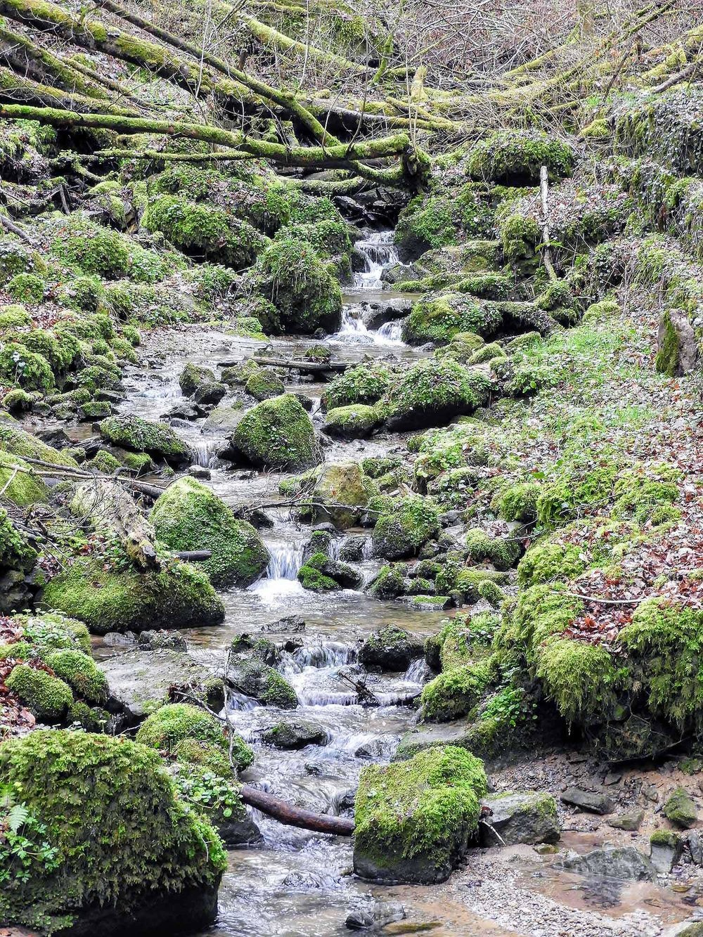 luxembourg-hike-hohllay-caves-echternach-little-switzerland-green-stream.jpg