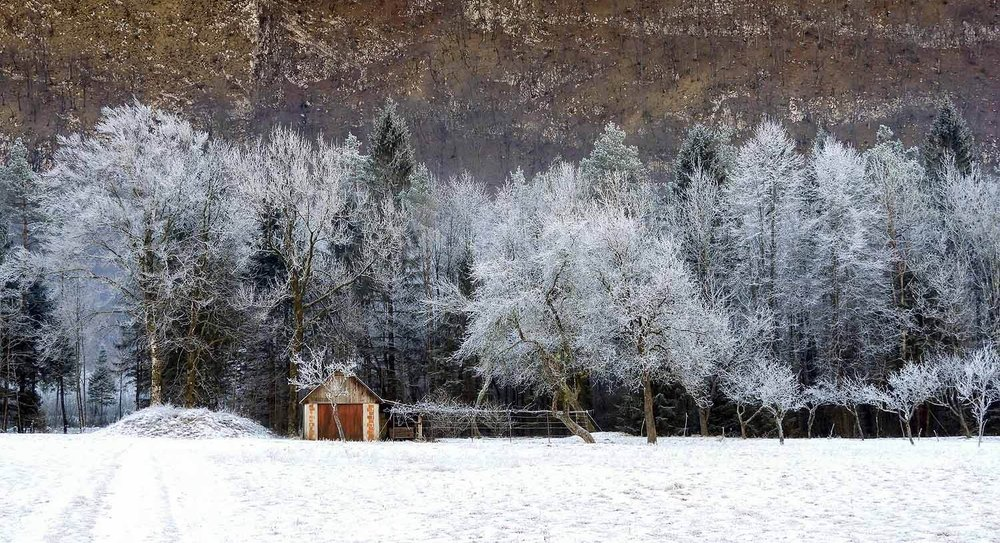 slovenia-triglav-national-park-icy-trees-barn.jpg