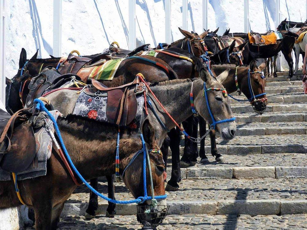 greece-santorini-donkey-station-stairs.jpg