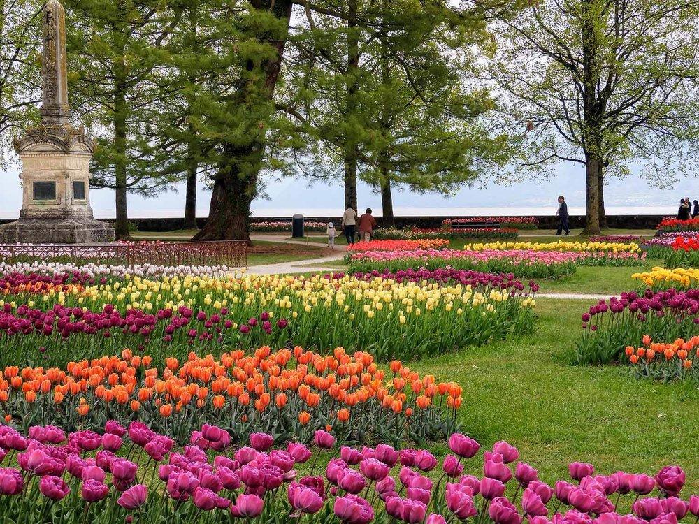 switzerland-luassane-morges-tulip-festival-purple-orange.jpg