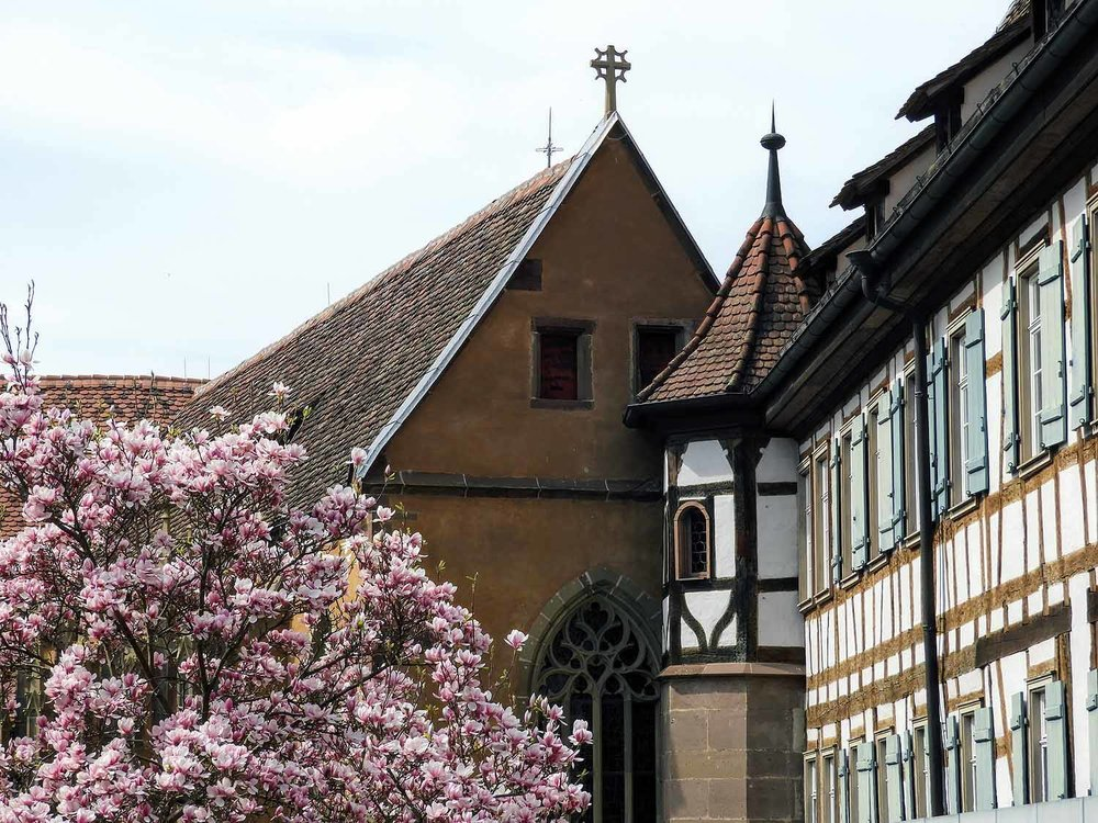 germany-kloster-maulbronn-square-spring-tree.jpg