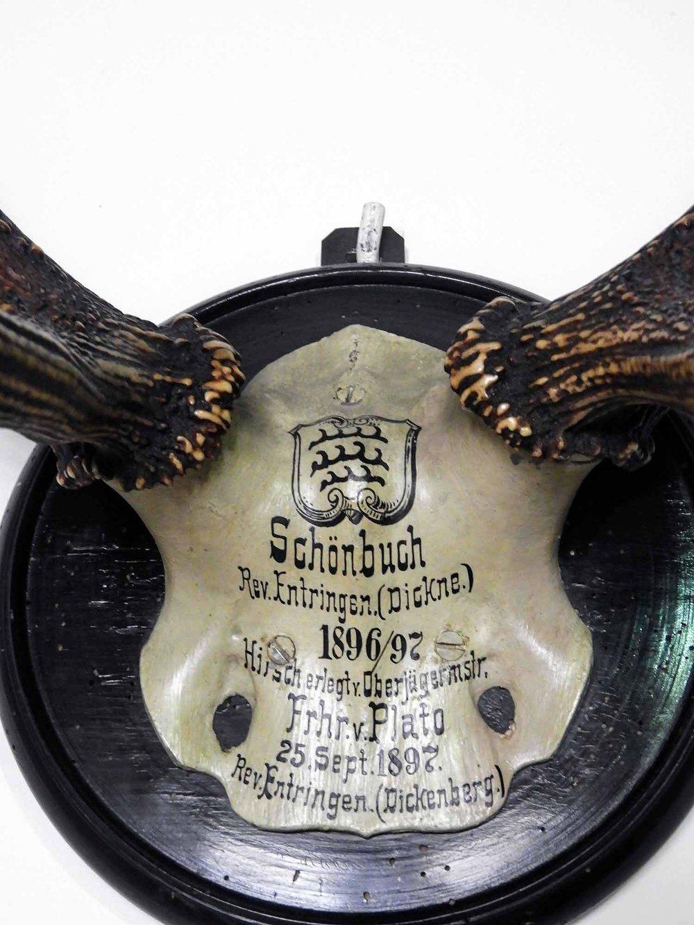 germany-bebenhausen-skull-hunt-deer.jpg