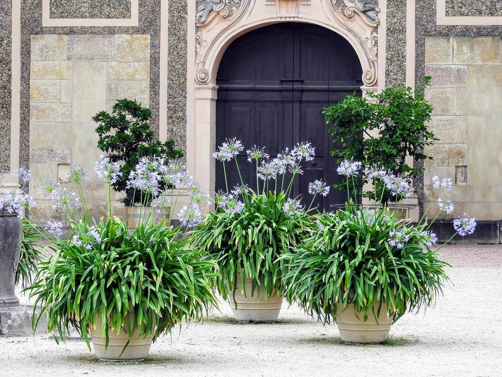 germany-rastatt-schloss-favorite-flowerpots.jpg