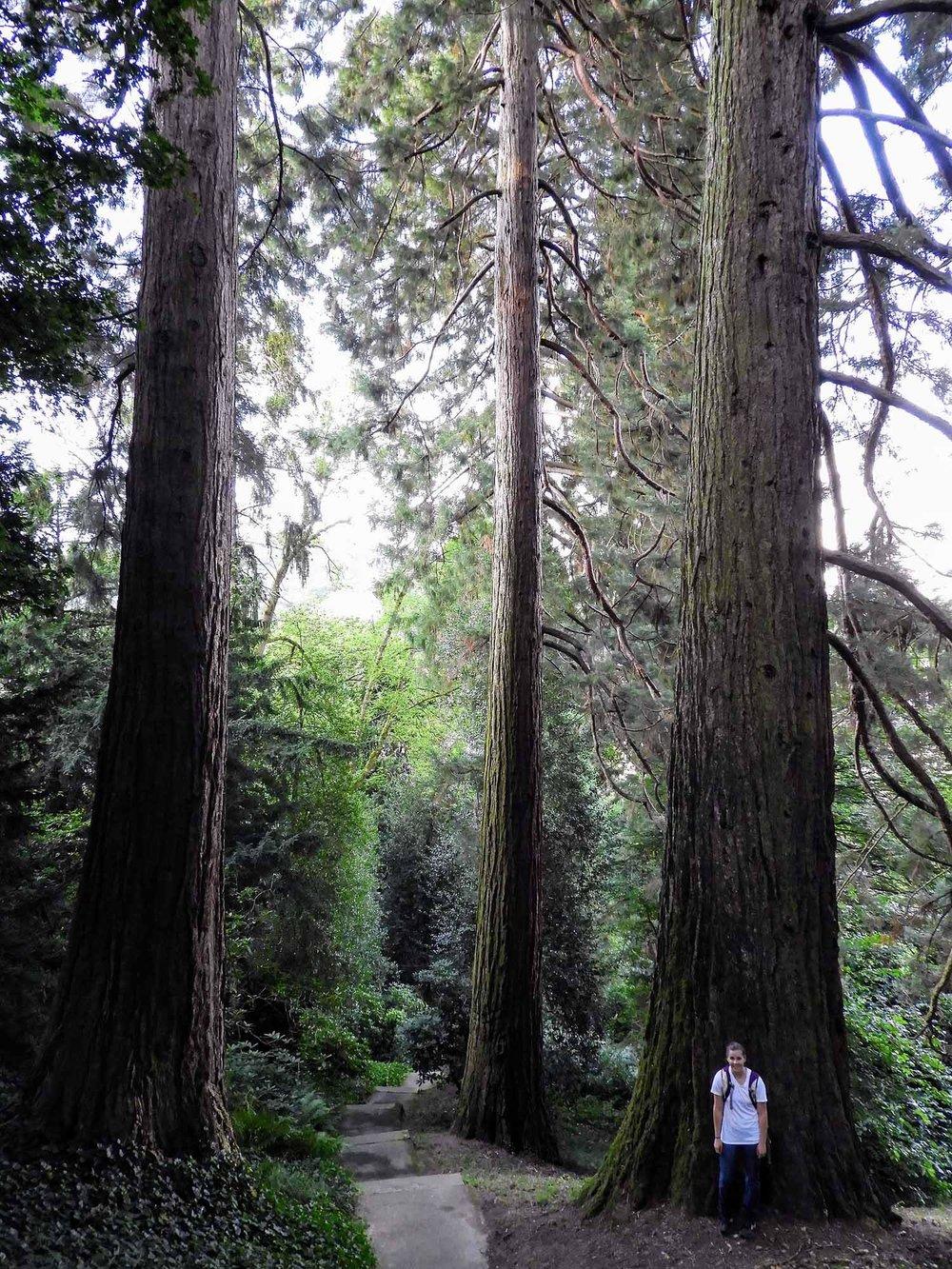 germany-baden-baden-giant-sequioa-grove.jpg