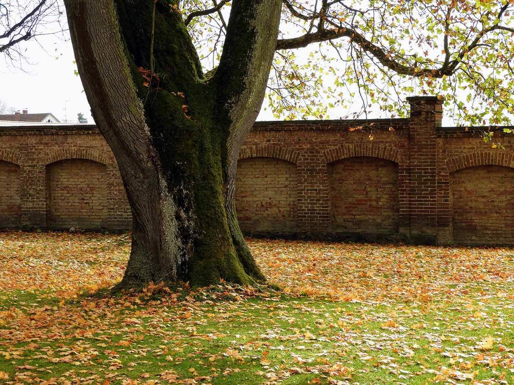 germany-kloster-schussenreid-autum-leaves.jpg