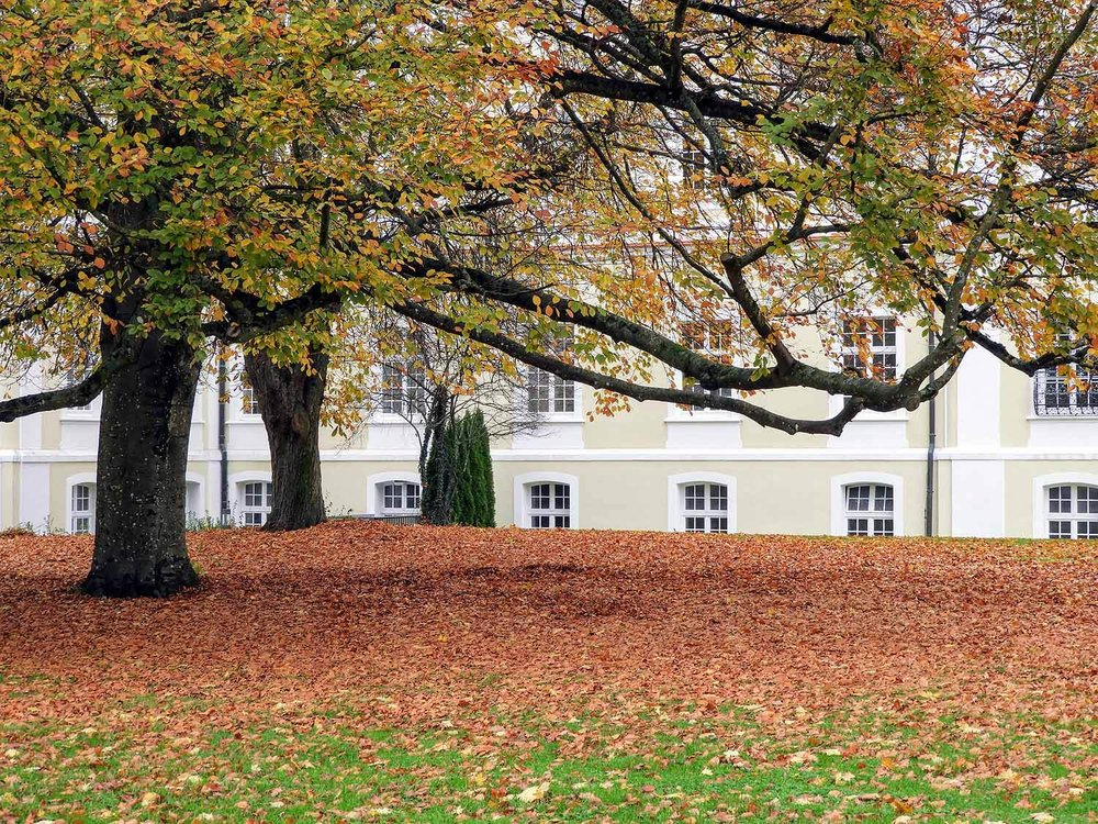germany-kloster-schussenreid-fall-autumn-leaves.jpg