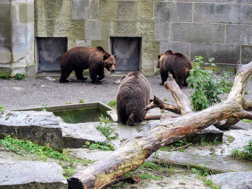 switzerland-bern-3-three-bears.jpg