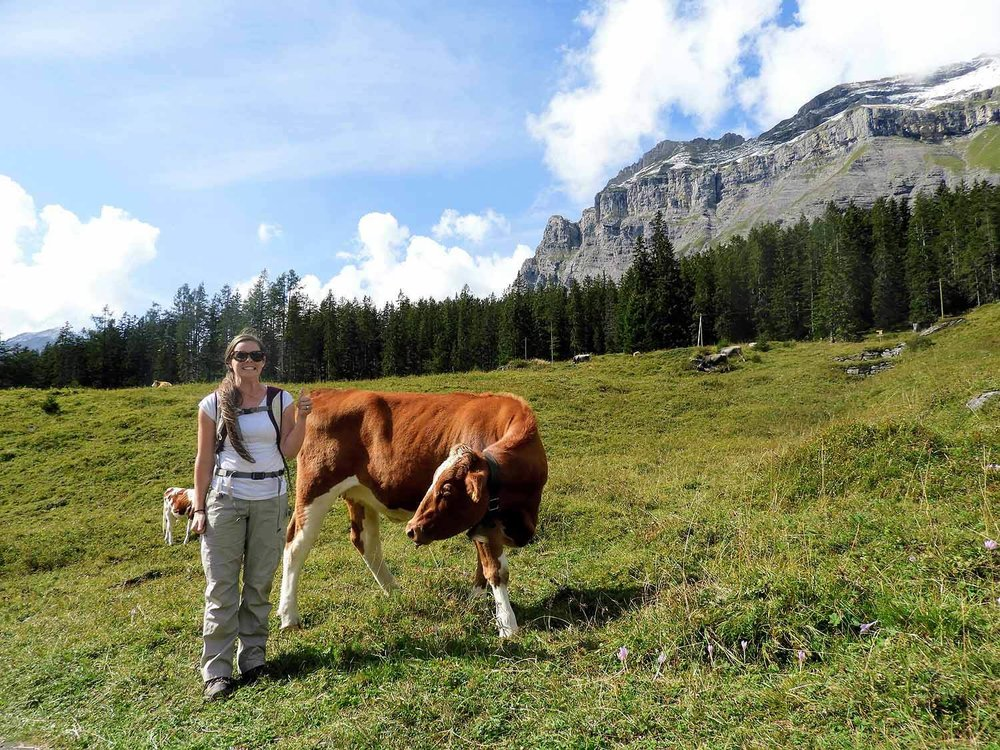 switzerland-oeschinensee-wifey-cow.jpg