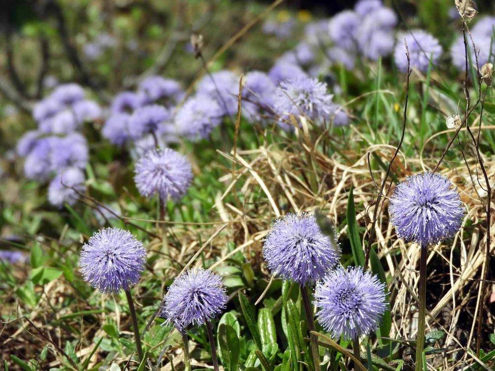 switzerland-ebenalp-seealpsee-spring-flowers.JPG