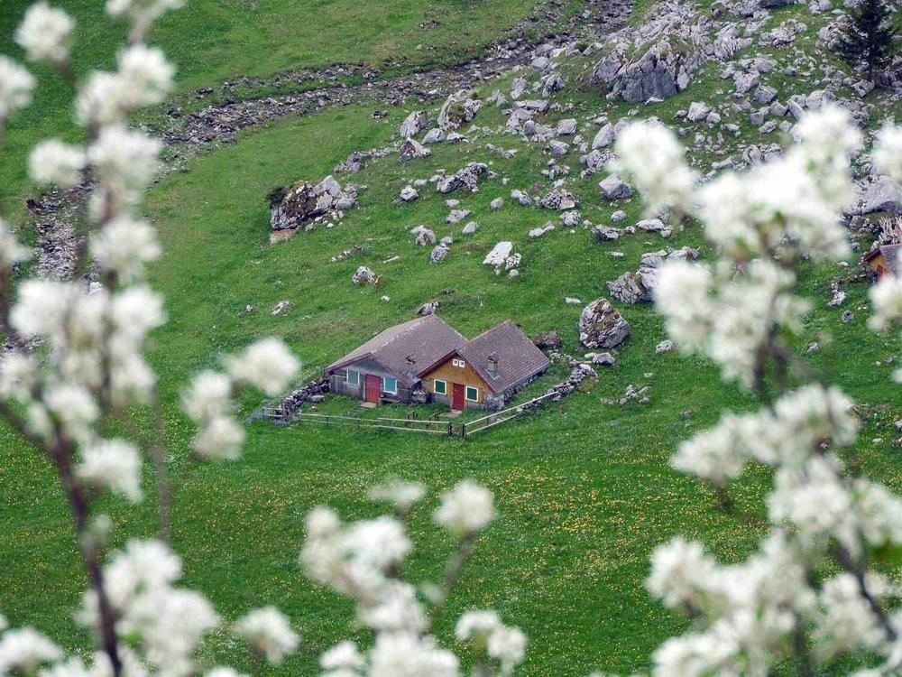 switzerland-ebenalp-seealpsee-spring-blossoms.JPG