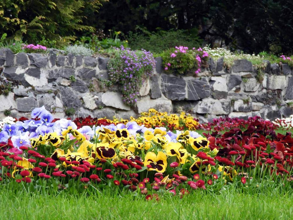 switzerland-engelberg-monestary-pansies.JPG