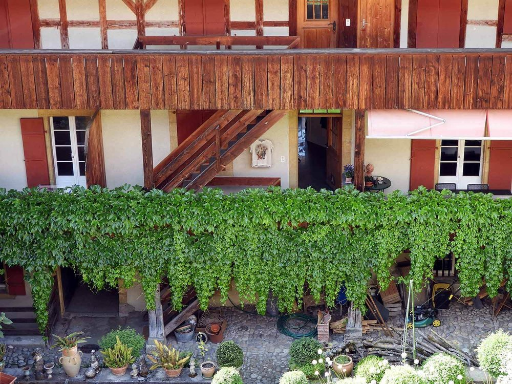 switzerland-murten-vines-house-ivey.JPG