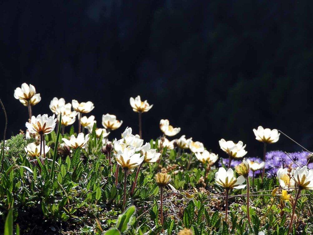 switzerland-cruex-du-van-canyon-flowers.JPG