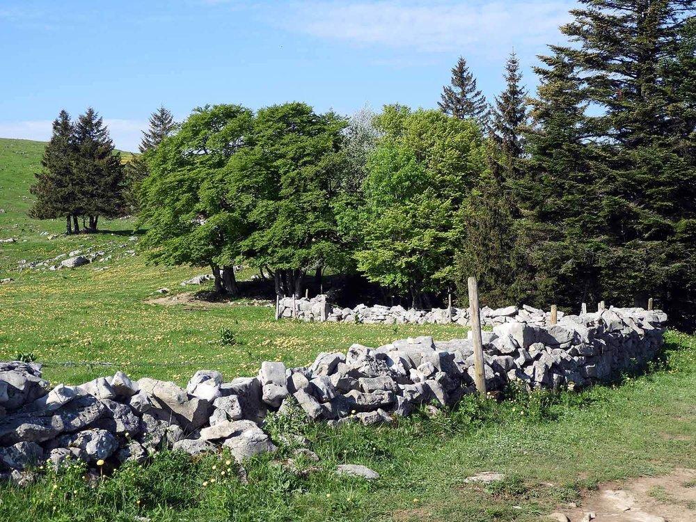 switzerland-cruex-du-van-stone-pasture-wall-cows.JPG