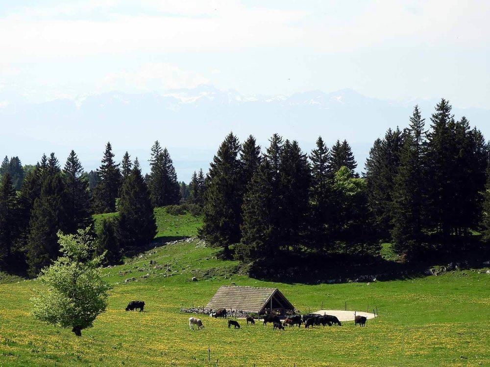 switzerland-cruex-du-van-farm.JPG