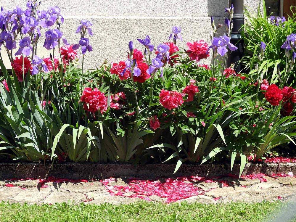 switzerland-saut-pont-brot-hike-walk-hiking-spring-blossoms-iris.JPG